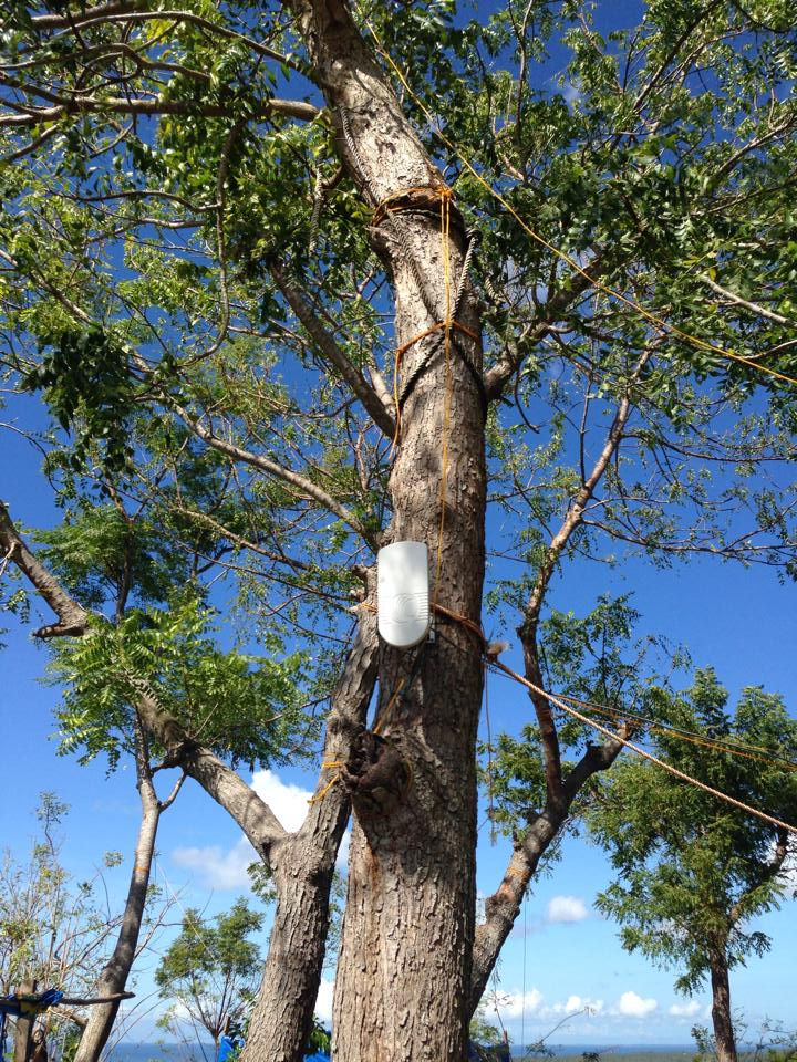 Tree mounted Cambium ePMP device.
